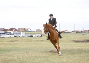 Турнир по конному адаптивному спорту проходит при поддержке ИНК
